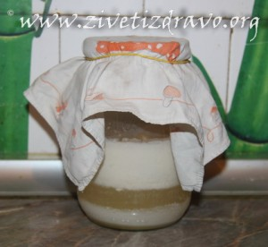 jogurt u fermentaciji
